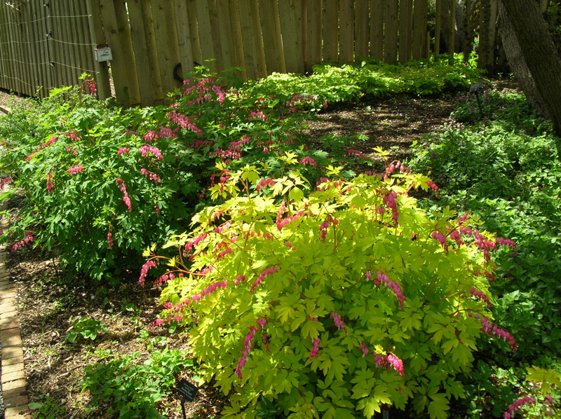 Planting Under Deciduous Trees : Grow and spread vigorously perfect under deciduous trees partly
