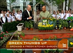 video link kitchen gardening