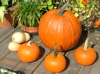 pumpkins on roofdeck